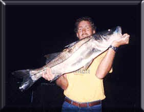 Florida fishing charter boat charters tampa clearwater for Snook fishing florida